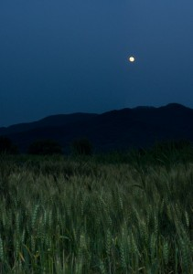 The moon rises over Dumulmeori Farm in the Paldang Region of South Korea (photo: Patrick Lydon)