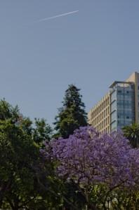 View #2 Cesar Chavez Park | San Jose, USA