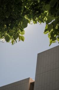 Pale box and tree | San Jose, USA