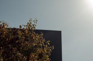 Blue Box and Tree | San Jose, USA