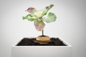 What is Food - McDonalds 1/4 Pounder with Live Plant on exhibit at Tent Gallery, Edinburgh (Patrick Lydon and Vero Alanis, 2012)