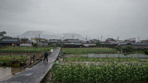 Corn fields behind town | Megijima, Japan