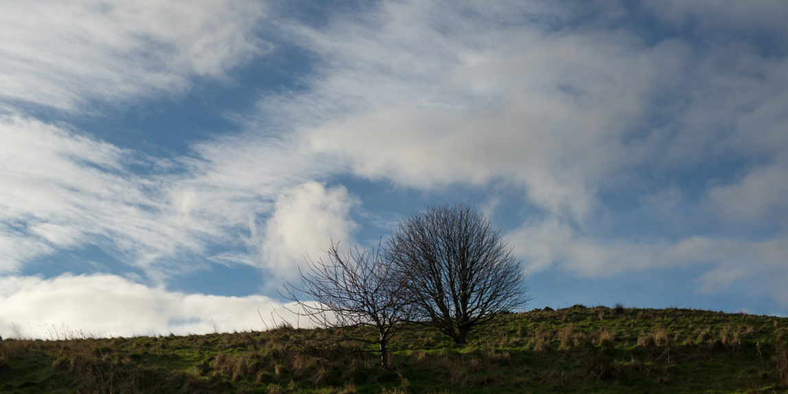 Two trees in Holyrood Park, Edinburgh, Scotland (P.M. Lydon | CC BY-SA)