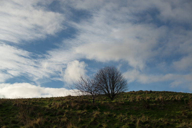Two trees in Holyrood Park, Edinburgh, Scotland (P.M. Lydon | CC CY-SA)