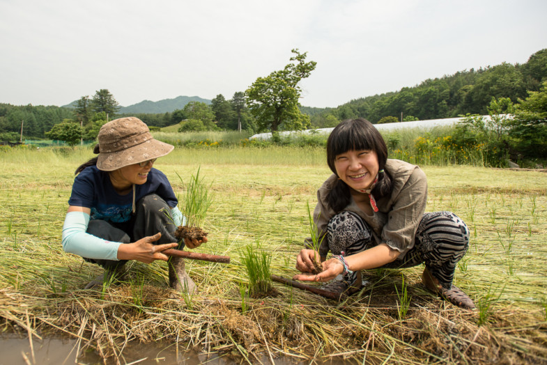 Suhee and Pada planting rice at the natural farm in Hongcheon, Korea