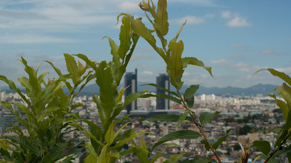 Daejeon, Korea viewed from the East Daedong hills (CC BY-SA, P.M. Lydon)