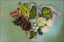 Natural Farm Vegetable Gift Box in Korea