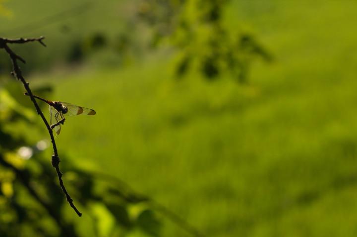 At Seonghyun Choi's natural farm for a pre-screening tour in Hongcheon (photo: P.M. Lydon   CC BY-SA)