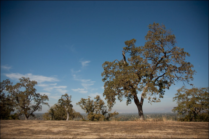 Oak Trees in California (photo: Suhee Kang | cc by-sa)