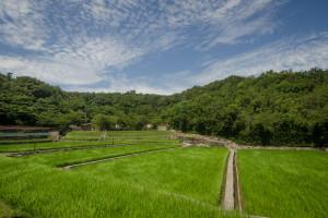 Rice Field - Nakamura Masakatsu | Megijima, Japan