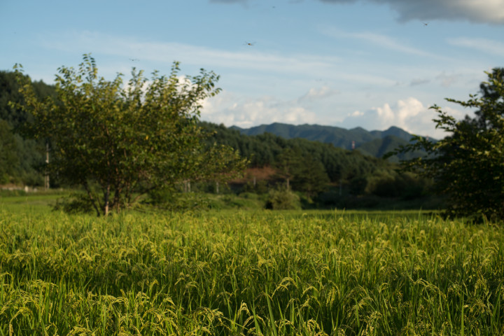 A natural rice farm during early Spring   Hongcheon, South Korea