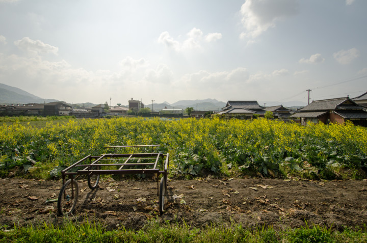 Traditionally held small-scale farmland | Mitoyo City, Japan
