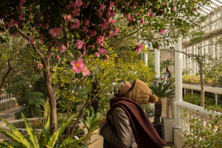 Enjoying the greenhouse gardens at Changgyeong Palace in Seoul