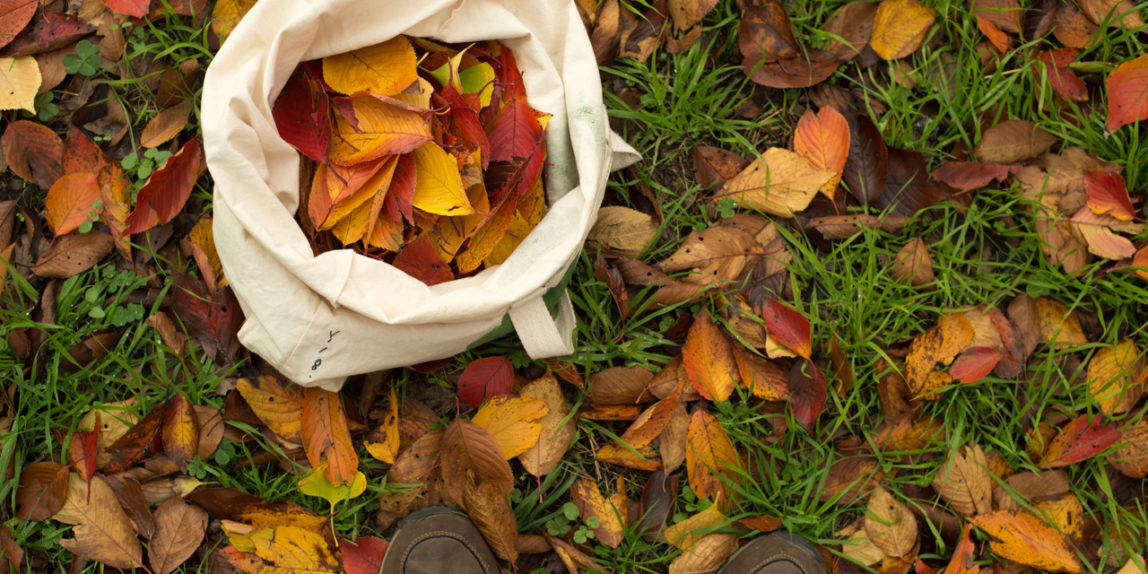 Collecting leaves in a park in Japan